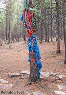 Evenki spirit tree, Hulunbuir, Inner Mongolia